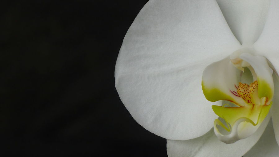 Nature Orchid
