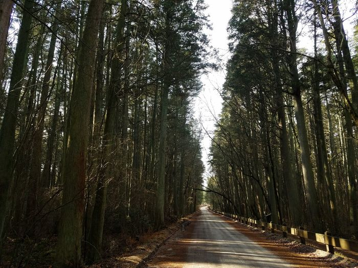 Tree Nature The Way Forward Growth Beauty In Nature Tranquility Road Forest Outdoors No People Scenics Day Sky Cedarforest