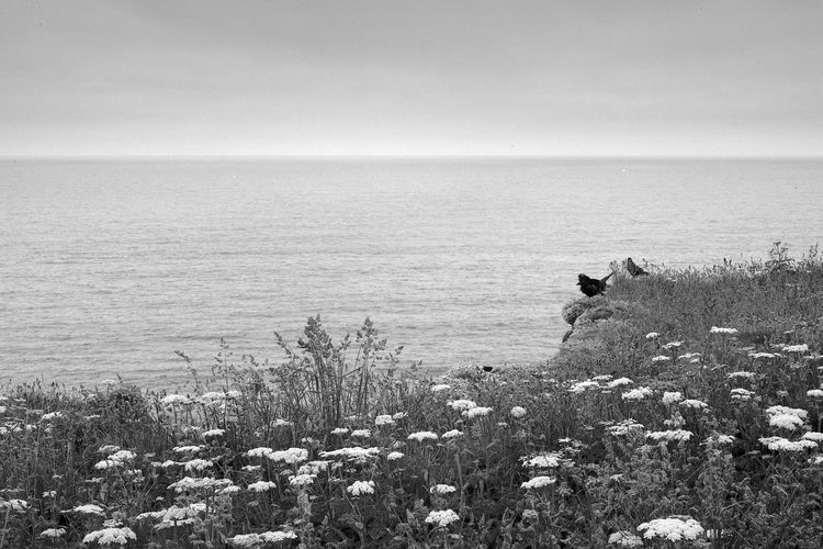 Looking Out To Sea Sea Water Beauty In Nature Plant Scenics - Nature Horizon Nature Horizon Over Water Sky Land Tranquility Tranquil Scene Flower Growth Birds Blackandwhite Black And White