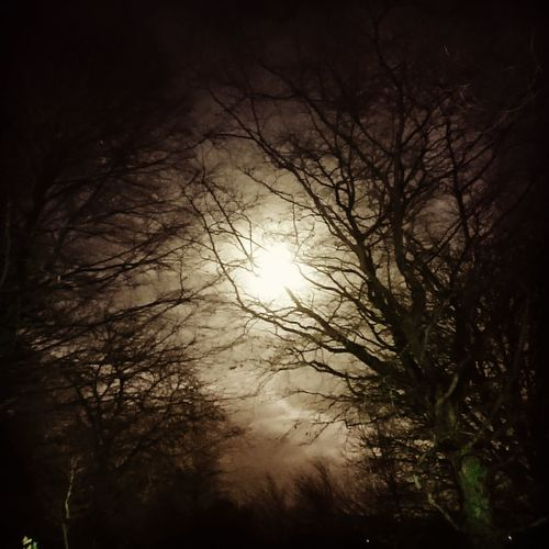 Tree Branch Bare Tree Forest Autumn Sunset Fog Winter Sky Moonlight Moon Astronomy Treetop Tree Canopy