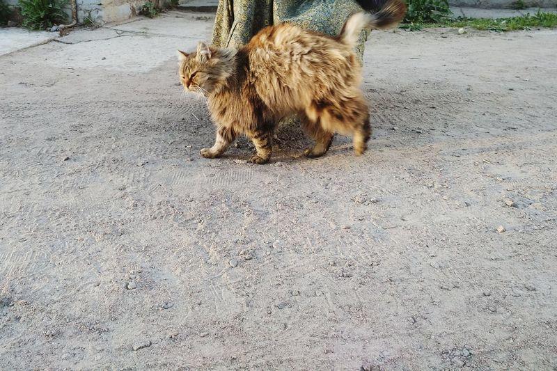 Valaam Russia Feline Dog