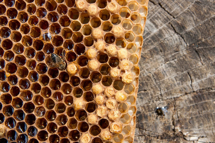 Animal Animal Themes Animal Wildlife Animals In The Wild APIculture Beauty In Nature Bee Beehive Close-up Day Group Of Animals Hexagon Honey Honey Bee Honeycomb Insect Invertebrate Nature No People Pattern
