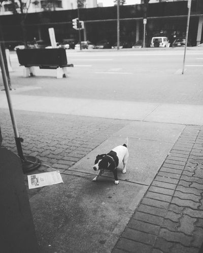 My morning coffee routine disrupted by a cute surprise outside the window. Dog Street Photography Instagram Inthemoment Black And White Photography