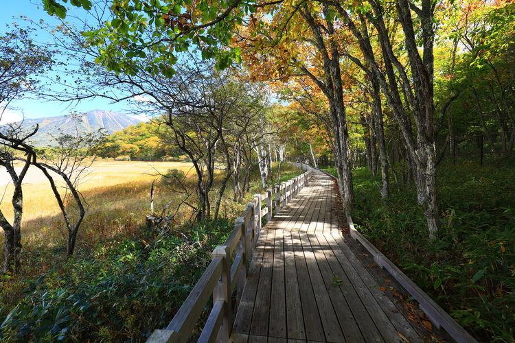 Tadaa Community Hello World Red Leaves Nikko Trail Hiking Swamp Japan Japan Photography Tree Water Sky