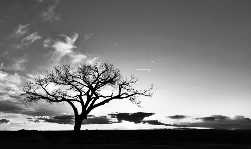 Taos Sunset b/w Head In The Sky Fine Art Photography Taking Photos High Desert Space For Copy Tree Branches Tree Silhouette TreePorn Tree And Sky Silhouette_collection Deserts Around The World Old Tree Tree Desert Landscape Tree Sunset Silhouette Taos New Mexico Sunset_collection Sunsets Sunset Silhouettes Desert Tree Desert Beauty Black And White Black&white Black & White