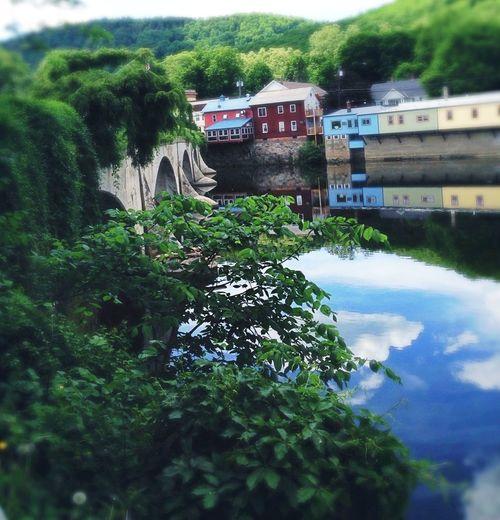 Bridges Enjoying The Sun Reservoir Water - Collection