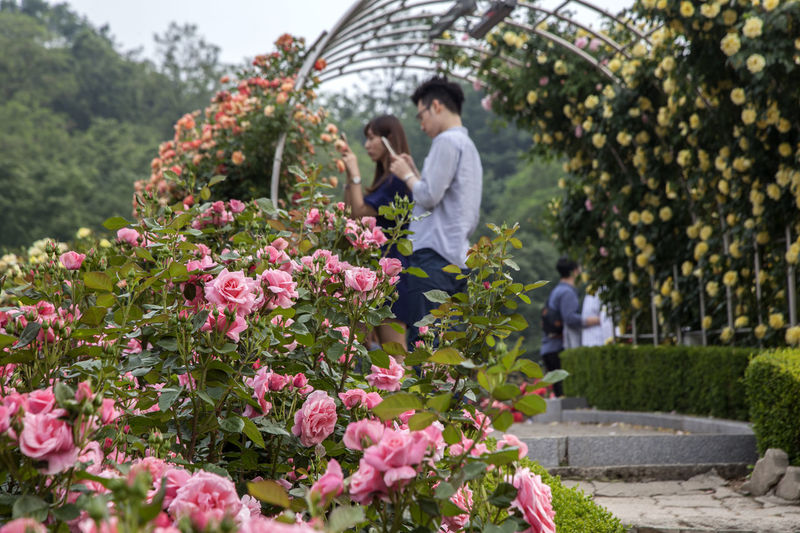 Beauty In Nature Blooming Casual Clothing Couple Day Flower Focus On Foreground Fragility Full Length Growth Leisure Activity Lifestyles Nature Outdoors Park - Man Made Space Plant Rose Garden Roses Tree