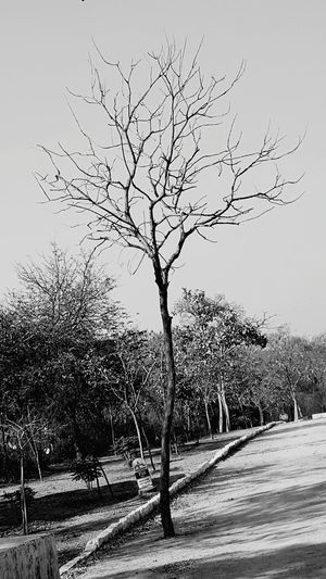 Tree Nature Beauty In Nature Sky No Branches No Leafs Tree Without Leaves