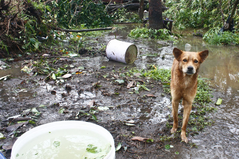 A dog stares, guarding whatever is left. Taken minutes after onslaught of Typhoon Glenda 2014, photo shows the wrath of water and wind. The town of Malvar, in this part of Batangas, Philippines is seldom visited by typhoon, stories of destroyed house, devastated crops are unheard and unseen here for years, with climate change change, these kind of images are more often than not. Destruction Documentary Eyeem Philippines How Do You See Climate Change? How's The Weather Today? Real People Showcase: November Tropical Storm Typhoon