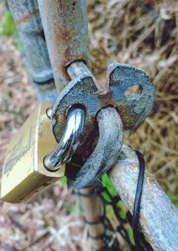 Winter locked Day No People Outdoors Close-up One Animal Focus On Foreground Winter 2017 Winter Walk Padlocked Gate Rusted Metal  Rusted Lock Gates And Fences