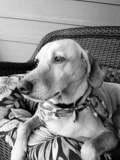 EyeEm Animal Lover Dogs Mansbestfriend EyeEm Best Shots - Black + White Animals Petsofeyeem Black And White Pets Petslife First Eyeem Photo Hanging Out Galaxy S7 Gs7