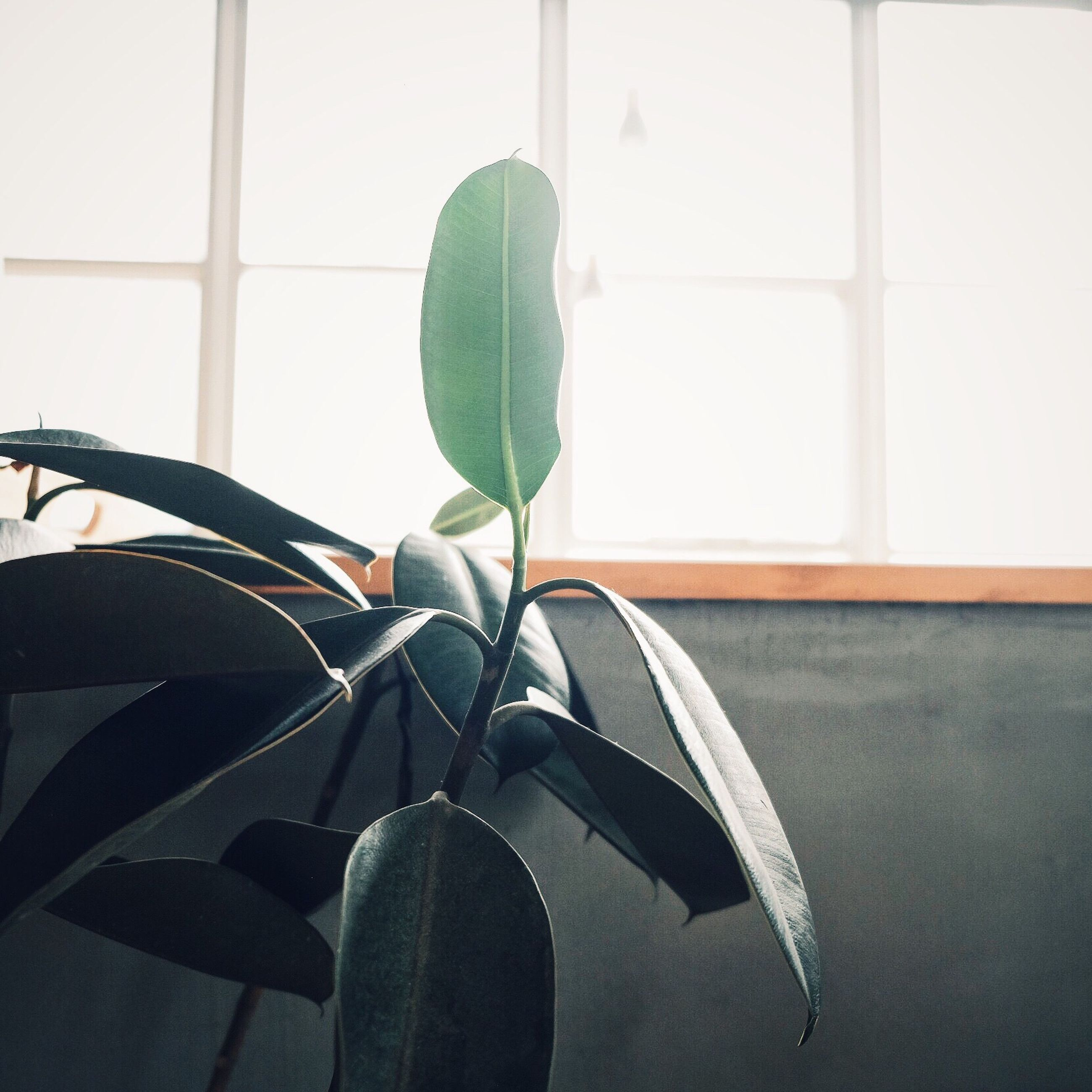 plant, close-up, growth, leaf, potted plant, indoors, green color, window, day, cactus, metal, no people, wall - building feature, built structure, nature, sunlight, focus on foreground, spiked, home interior, sharp