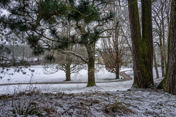 Wilhelmsthal Beauty In Nature Calden Cold Temperature Day Forest Landscape Nature No People Outdoors Park Scenics Sky Snow Tranquil Scene Tranquility Tree Weather Wege Winter