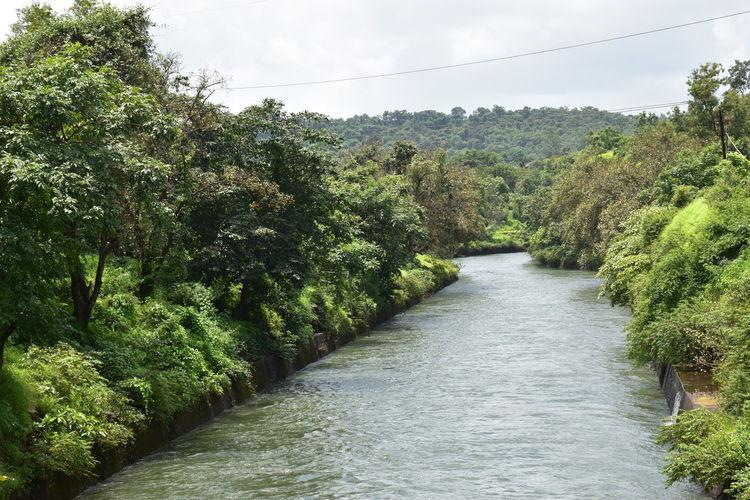 Kolad Kundalika River River Tree Rural Scene Sky Green Color Plant