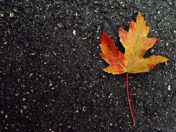 Rayning Day Autmn Notes Thoughts Autumn Leafs Leaf 🍂 Fall Beauty Notes From The Upperground The Message Day Out