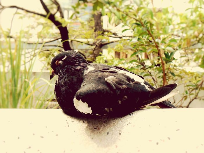 Haze Life In Motion Lovepigeons Pigeon Outdoors Green Nature Home Eyes Closed  Sleep Eyeemphoto Pets Animal Eyeem Market Fine ArtSummer Memories...
