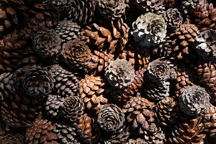 Abundance Backgrounds Close-up Directly Above Food Food And Drink Freshness Fruit Full Frame Healthy Eating Heap High Angle View Large Group Of Objects No People Pattern Pine Cone Stack Still Life Textured  Wood - Material