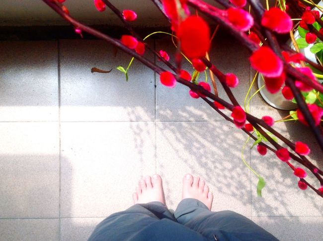 Chinese Sakura Flowers Flower and Shadow Light And Shadow of the trees on my Feet Foot Topdown