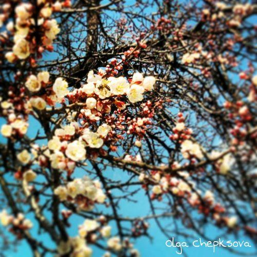 Весна... Что еще нужно для счастья?