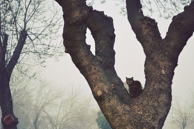 Cat Tree Fog Winter