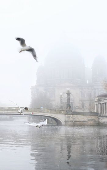 Seagull flying over river in city against sky