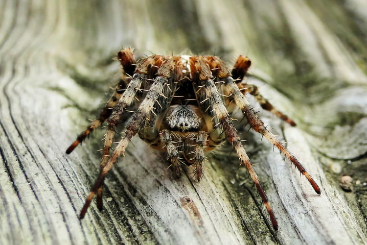 Close-up of jumping spider on wooden roof