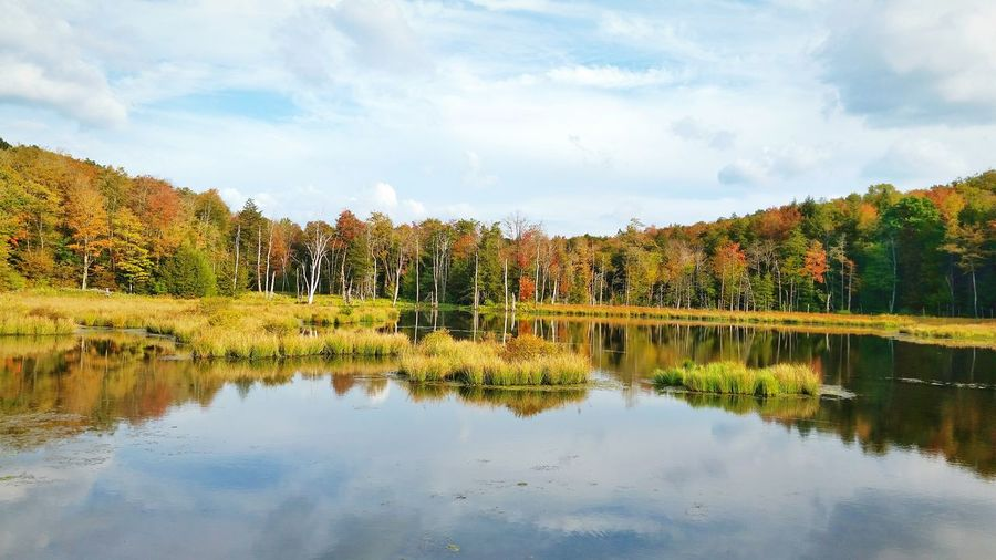 Scenic view of lake in forest against sky