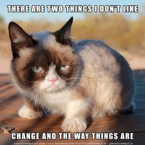 I have found my soulmate! ❤ 😃 Grumpycat Cat Reactionarydilemma