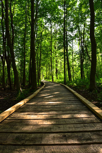 boardwalk through forest with sunlight dappling Lines And Angles Sifton Bog Vanishing Perspective Backlighting Beauty In Nature Boardwalks Conservation Day Forest Growth Natural Area Nature No People Outdoors Scenics Shadow And Light Play The Way Forward Tranquil Scene Tranquility Tree Tree Trunk WoodLand