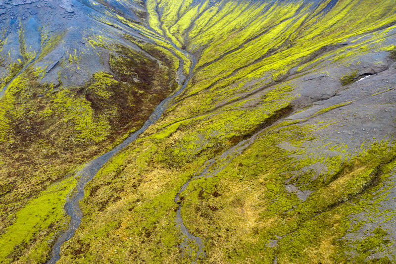 Scenic view of moss growing on land