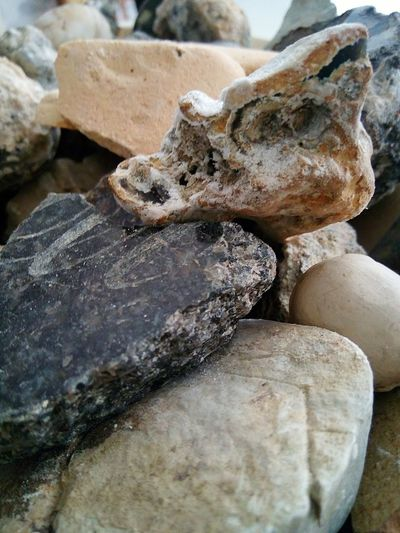 Living Stone's.*~ Artistic Expression Freestyle Variation Freestyle Life No People Still Life Mother Nature Stone - Object Rock Formation Recreational Pursuit Hallo World Beach Sand Fossil Prehistoric Era Evolution