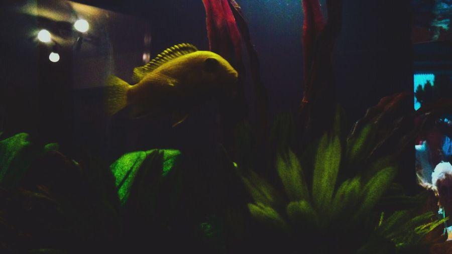 Gone Fishing Hunnidstoryco Fisheye Fishing Aquarium Life Marine Life Phoolzeyemedia Phoolzeyeview Underwater Photooftheday Photography Videography Life Peace ✌ Serenity