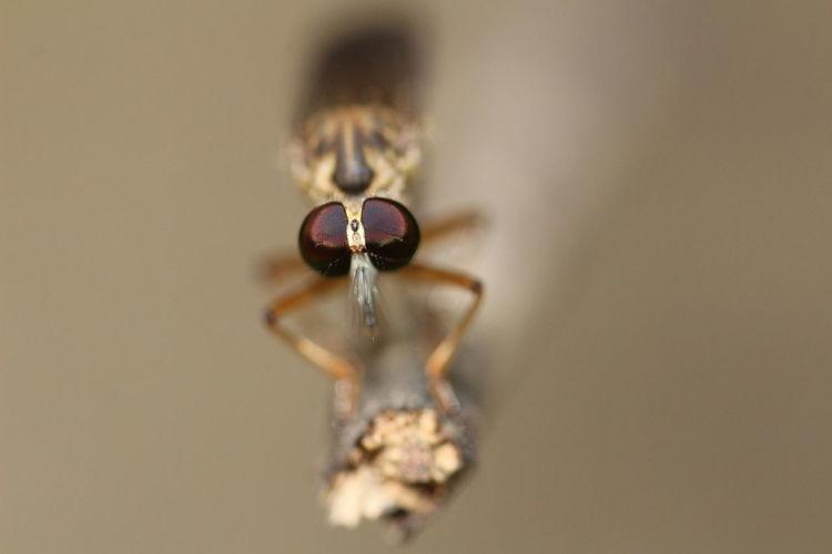 Robberfly EyeEm