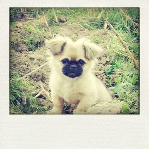 Lola^^