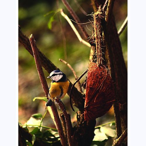 Animal Themes Animals In The Wild Beauty In Nature Bird Close-up Day Focus On Foreground Nature No People One Animal Outdoors Perching Plant Tranquility Wildlife Zoology