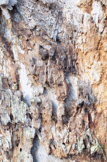 Bark Texture Textured  Backgrounds Full Frame Rock - Object Rough Nature Close-up Outdoors Day Tree No People Pattern