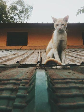 One Animal Animal Themes Domestic Cat No People Animal Full Length Pets Mammal Standing Day Outdoors HTC Desire EYE Htcphotography EyeEm Gallery EyeEm Best Shots Myphotolife Pixlesphotography
