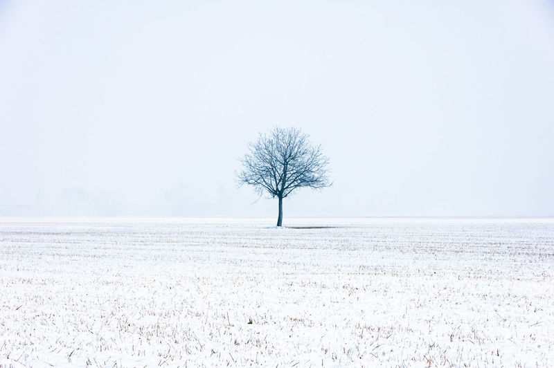 Bare Tree On Snowcapped Field During Winter