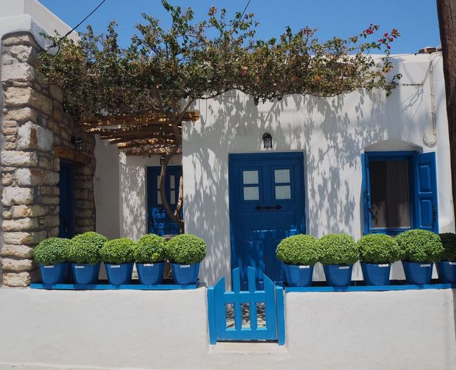 Symmetry Plant Architecture Built Structure Building Exterior Growth Nature No People Day Building Potted Plant Blue House Outdoors Residential District Window Door Wall - Building Feature