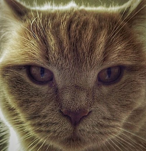 Redhead Animal Themes Cat Close-up Cute Color Feline Indoors  Looking At Camera Mammal No People One Animal Pets Portrait Whisker EyeEmNewHere Perspectives On Nature Germany NRW Heimat The Portraitist - 2018 EyeEm Awards #NotYourCliche Love Letter