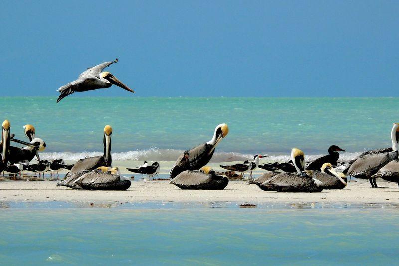 Pelicans on sunny beach