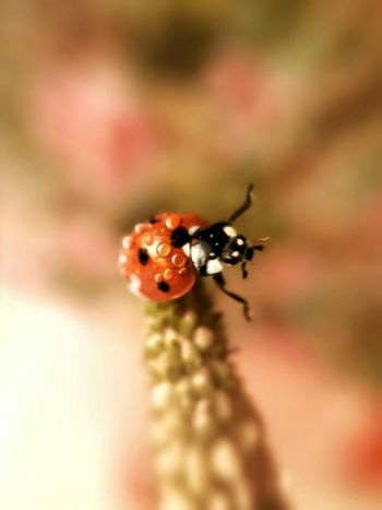 This is my dancing ladybug I hope you like it 😁😁😁😁 Tadaa Community Flowers From Adam's Factory Samsung Galaxy S4 Phone Ladybug Collection Creative Photography Everybody Clap Your Hands Clapping Your Hands EyeEm Nature Lover Macroclique EyeEm Gallery Macro Nature Flowers_collection Nature_collection Macro Beauty Phone Macro Streamzoofamily Insect_perfection Macro Photography Drop Collection Drops_perfection Droplets Collection Flower Photography Flower Collection Samsung Galaxy S4 Dancing Ladybug