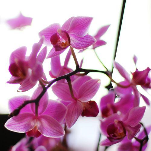 Orchid Violet By Motorola Flowerporn Bokeh Living Bold Violet Pink Flower
