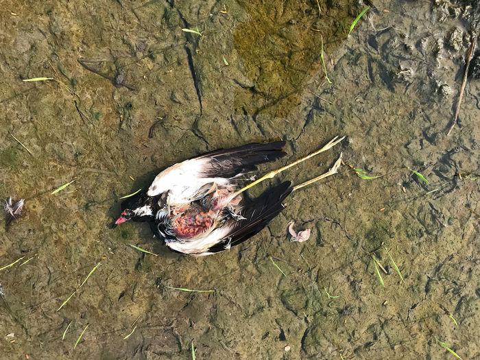 Dead bird Dead