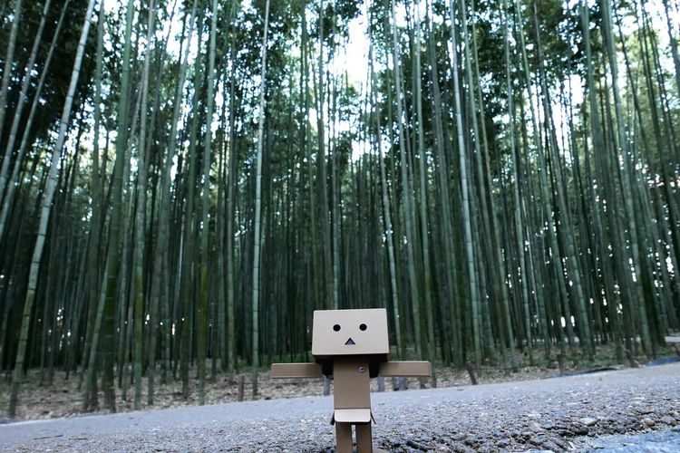 Guess you know who this is ^^' Danbo Danboard Bamboo Bamboo Forest Kyoto Japan Japanese  Japan Photography Japanese Temple Shrines & Temples Nature Tree Forest Path Jungle Wildlife & Nature Outdoors Perspective Green Natural Beauty Natural High Low Angle View Bokeh