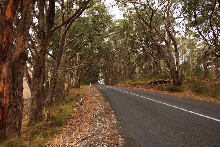 Australian Country Road Australian Country Road Gumtrees