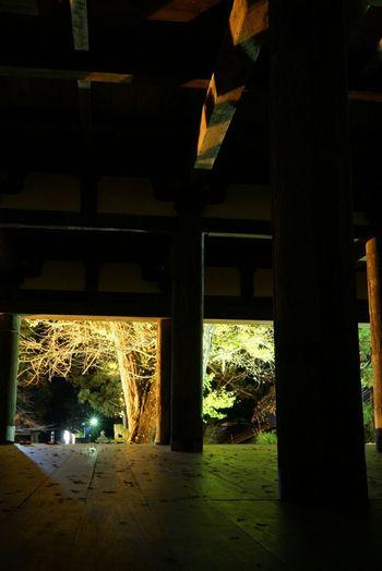 Enjoying Life Sony SONY α7 Sony A7 Light Up Autumn Autumn Leaves Colors Of Autumn Gingko Gingko Tree Yellow Gingko Tree Yellow Gingko Shinto Shrine Shinto 喜多方 新宮熊野神社 長床