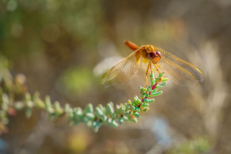 Dragonfly on a