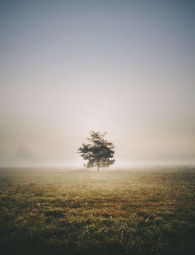 Field Tree Landscape Nature Tranquil Scene Beauty In Nature Tranquility Lone Outdoors