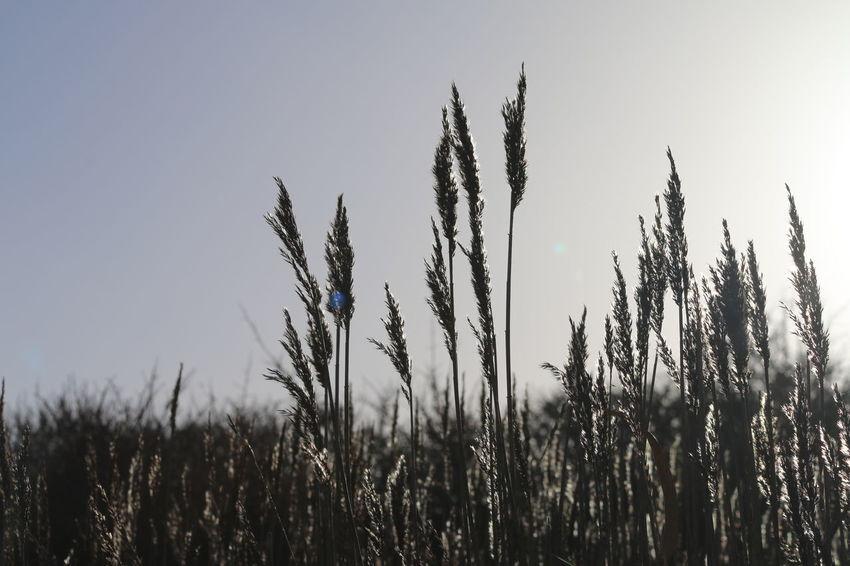 Nature Light And Shadow Sunshine Light Sun Flare Fields Nofilter Eyemphotography Eyem Nature Lovers